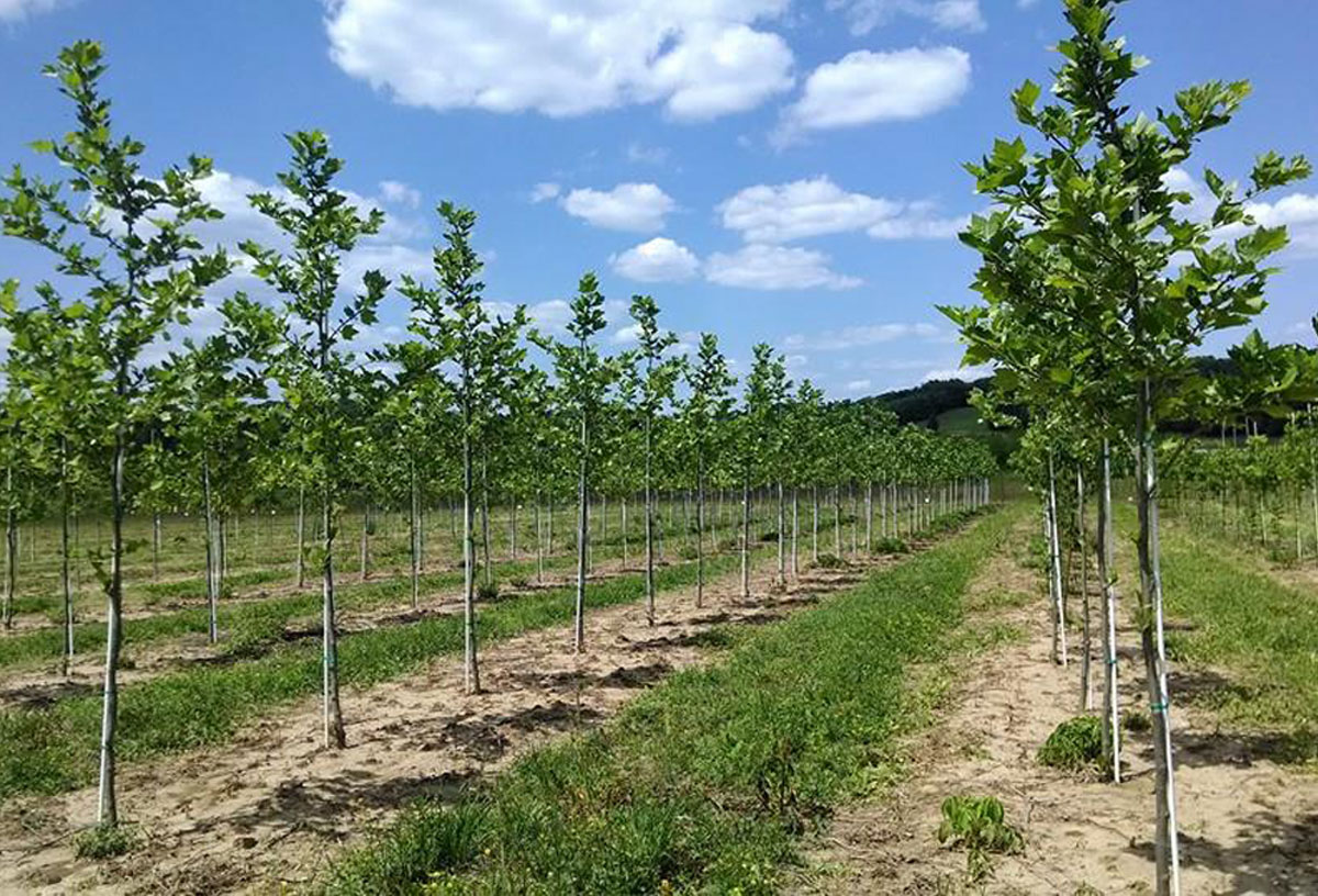 Bremo Trees Has Been Providing Quality And Genuine Customer Service To The Landscape Industry For Past 25 Years