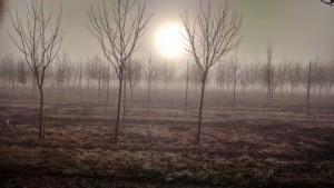 sunrise fog2